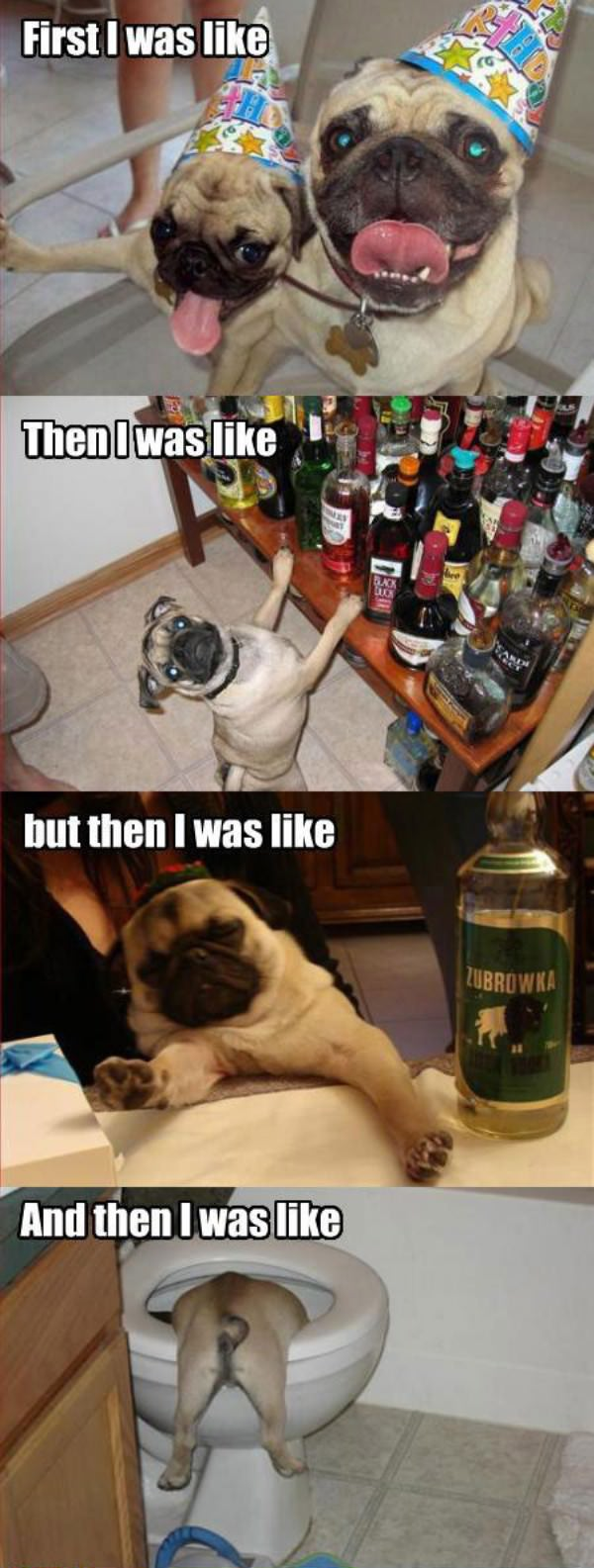 Party Dogs funny picture