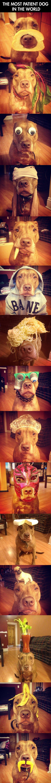 patient-dog.jpg