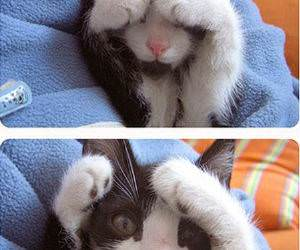 Peekaboo Kitten Cute Picture