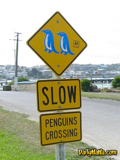 Watch out for Penguins