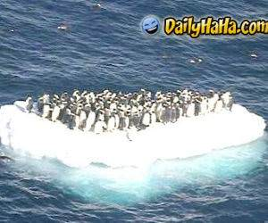 Penguins on a cruise.
