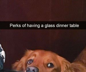 perks of a glass dinner table