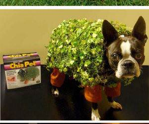 Pet Costumes funny picture