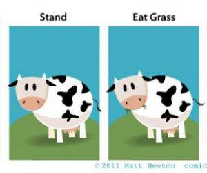 Pet Cow funny picture
