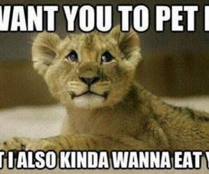 Please Pet Me funny picture