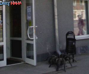 Pet Spider Picture