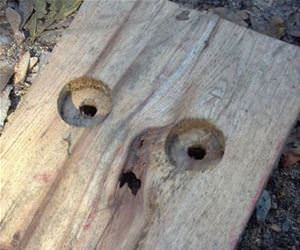 petrified wood funny picture