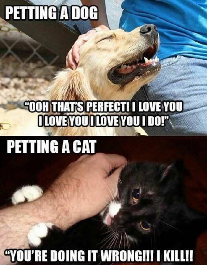 petting cats vs funny dogs