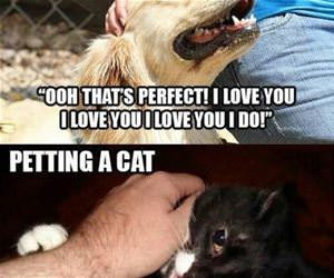petting cats vs dogs funny picture