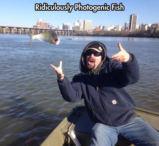 photogenic fish funny picture
