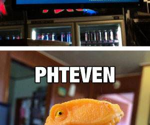 phteven funny picture