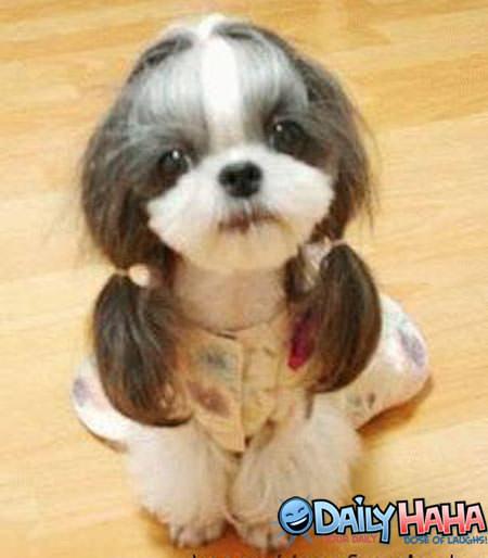 Cute Dog Haircuts
