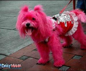 Pink Dyed Dog