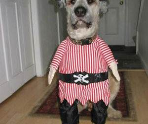 The Pirate Dog