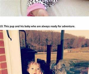 pitbulls who love babies funny picture
