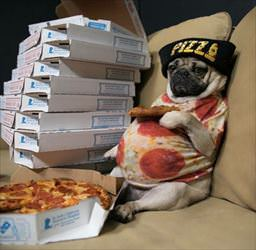 pizza pug and chill