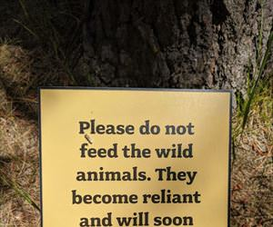 please do not feed them