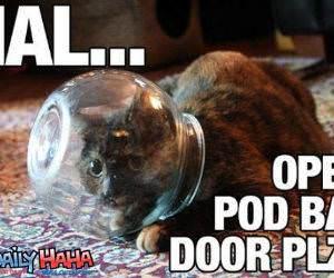 Cats Helmet
