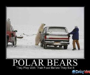 Playful Bears funny picture