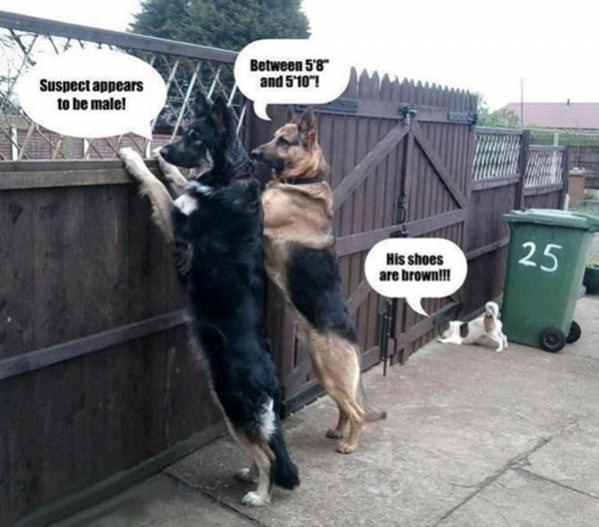 Police Dogs funny picture