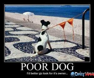 Poor Dog funny picture