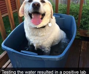 positive lab result funny picture