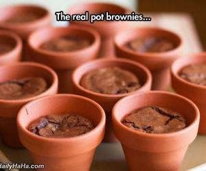 pot brownies funny picture