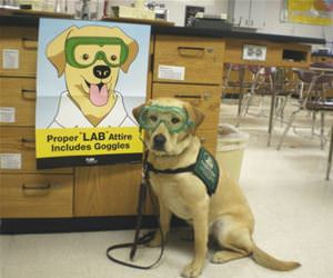 proper lab attire funny picture
