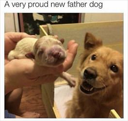 proud new father dog