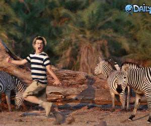 Psychotic Zebra Man