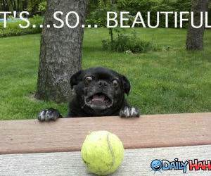 Pug Impressed funny picture