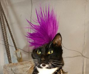 punk rock cat