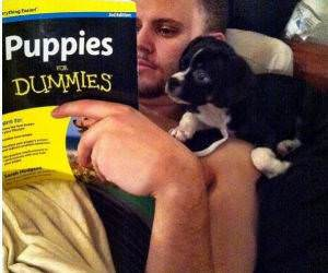 Puppies For Dummies funny picture