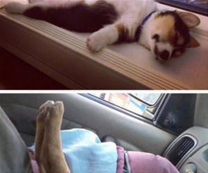 puppies can sleep anywhere funny picture