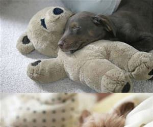 puppies cuddling stuffed animals funny picture