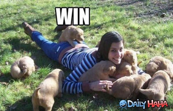 puppy-wins.jpg