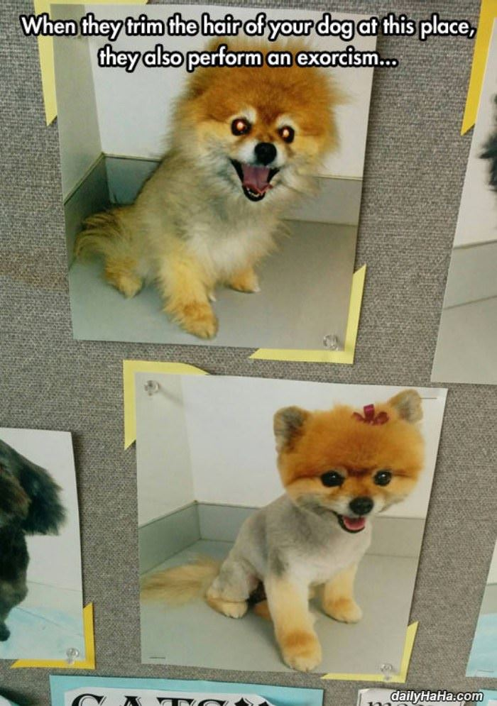 puppy haircut funny picture