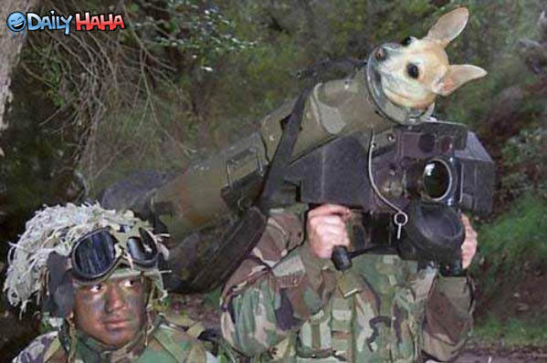 Puppy Launcher Funny Pic.