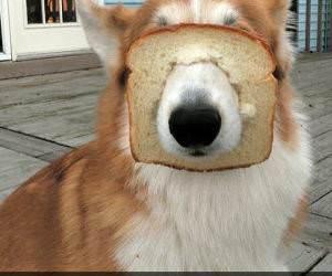 purebread funny picture