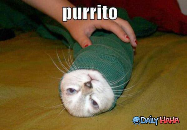 Purrito funny picture