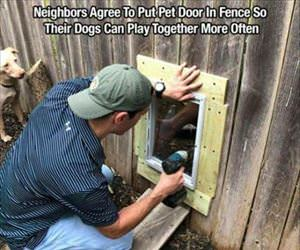 put in a pet door