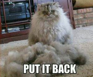 You Better Put It Back Now funny picture