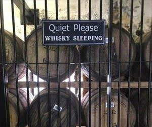 quiet please our whiskey is sleeping