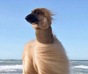 quite a windy day