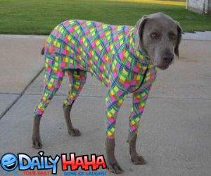 Poor dog dressed up terribly.
