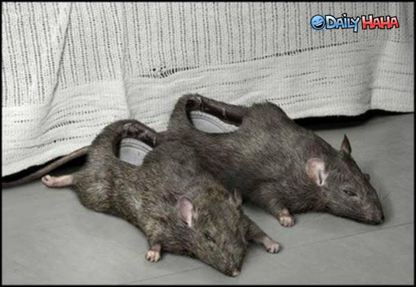 Rat Slippers Funny Picture