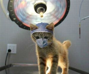 ready for your cat scan funny picture