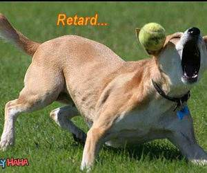 Retarded Dog