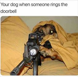 rings the doorbell