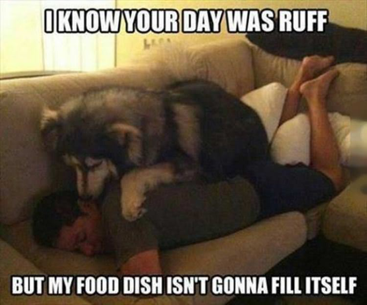ruff day funny picture